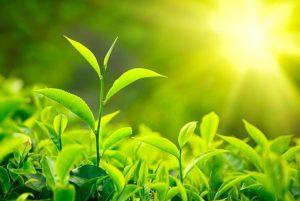 آموزش داشتن گیاهان با طراوت