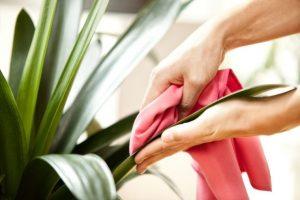 تمیز کردن برگ گل گیاهان