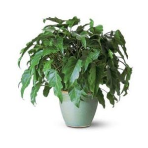 کاهش آلودگی هوا توسط گیاهان