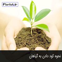 نحوه کود دادن به گیاهان
